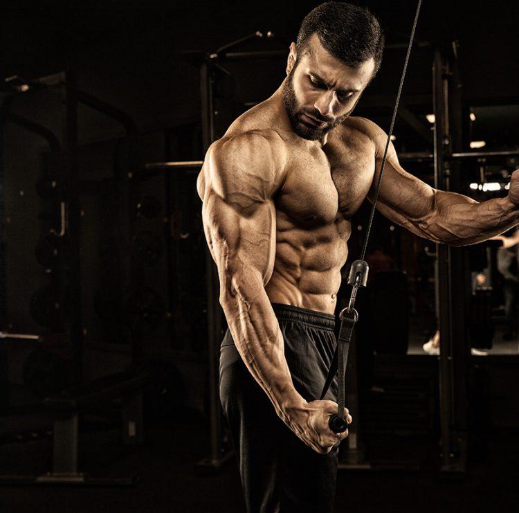 GoldNutrition   Como Ganhar Massa Muscular   Hipertrofia Muscular